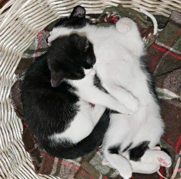 Kittens Post 1